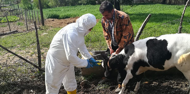 Kahramanmaraş İl Tarım Ve Orman Müdürlüğü Veteriner Hekim Ve Veteriiner Sağlık Teknikerleri Sahada