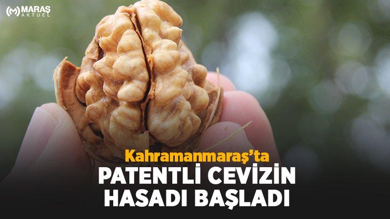 Patentli Efsus46 Cevizinin Hasadı Afşin'de başladı!